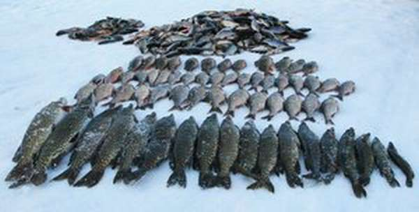 Рыбадка в Кемеровской области