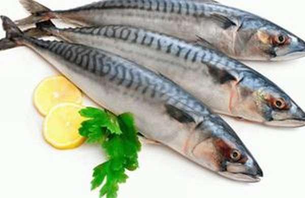 Особенности рыбы макрель