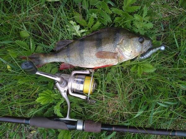 Ловля рыбы с применением катушки Ryobi Excia