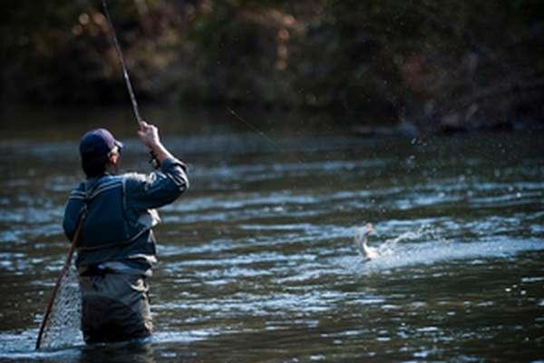 Какие рыбы водятся в Стрелецком ручье