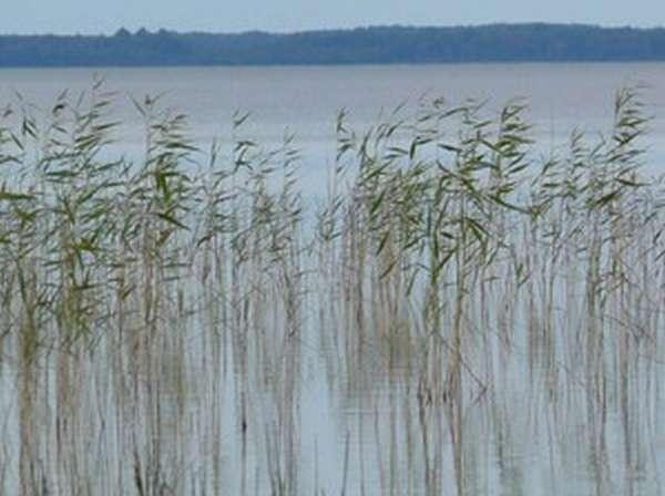 Есть водоёмы, где действуют запреты на лов рыбы