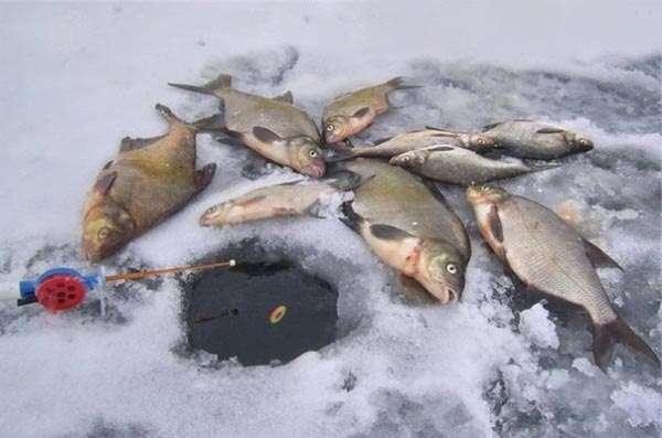 Зимняя лещевая рыбалка