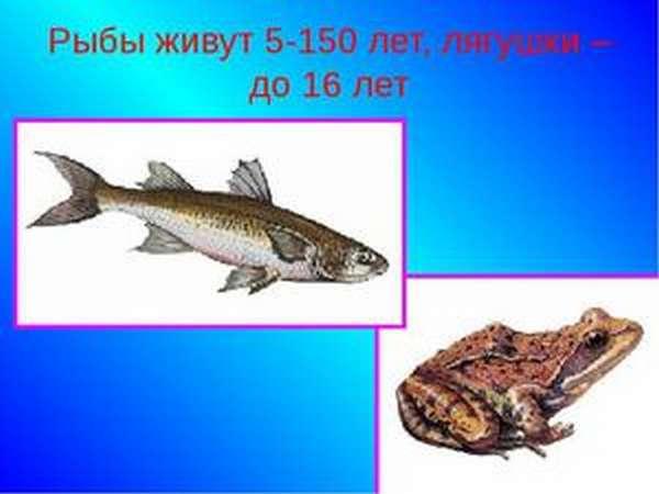 Продолжительность жизни рыб