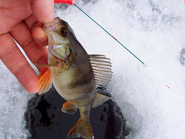 Ловля рыбы на мормышку нимфа