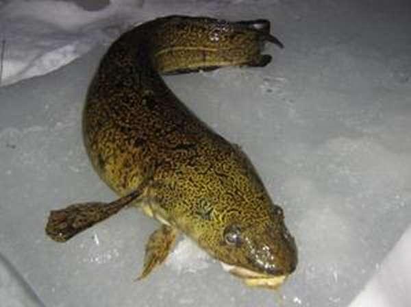 Секреты успеха ловли рыбы