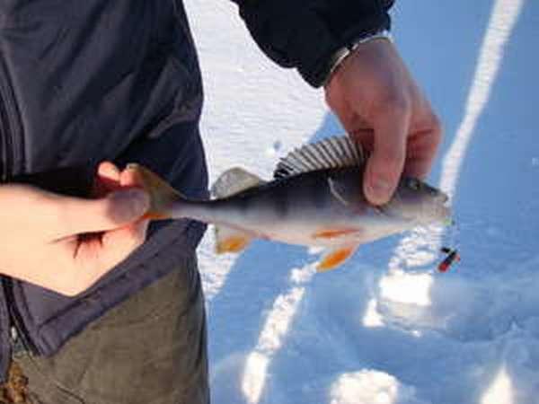 Как ловить рыбу на приманку