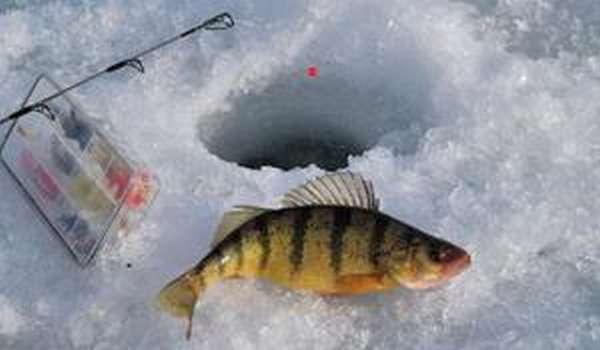 Все о повадках, особенности рыбалки и способах ловли.
