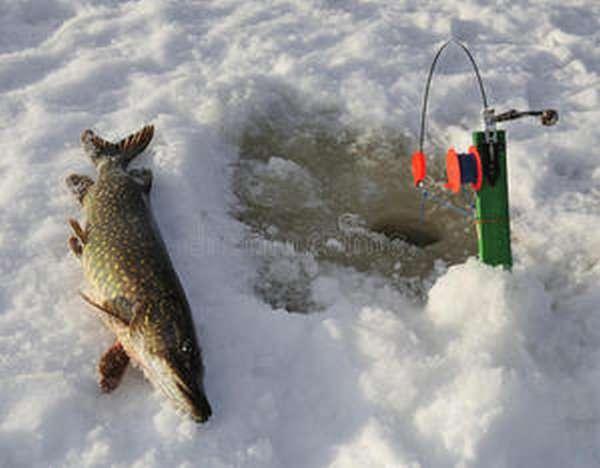 Как правильно оснастить жерлицу для зимней рыбалки