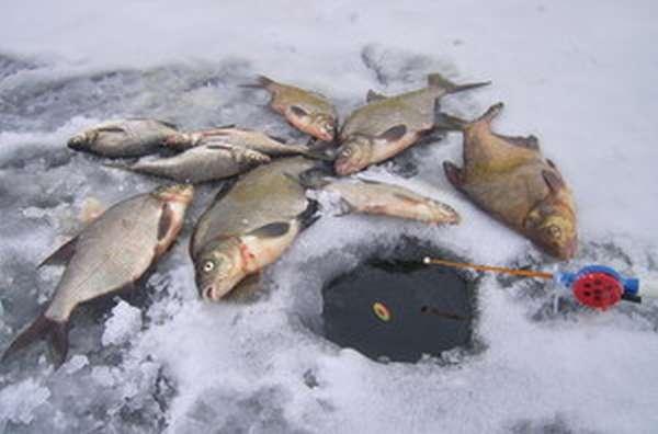 Ловля леща со льда зимой