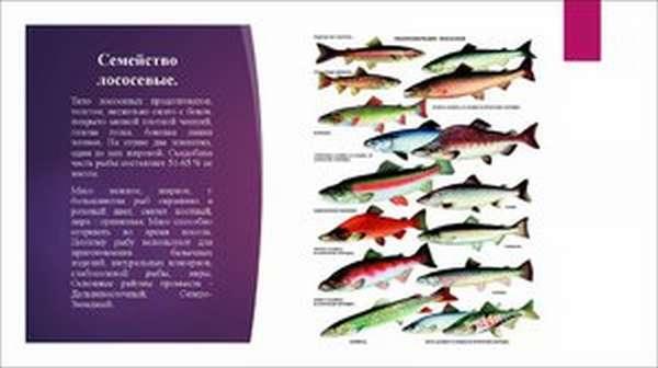Описание рыб семейства лососевых