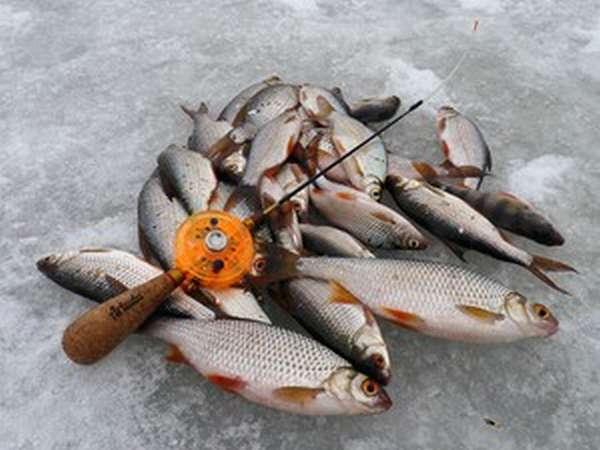 Как правильно ловить рыбу на чертика