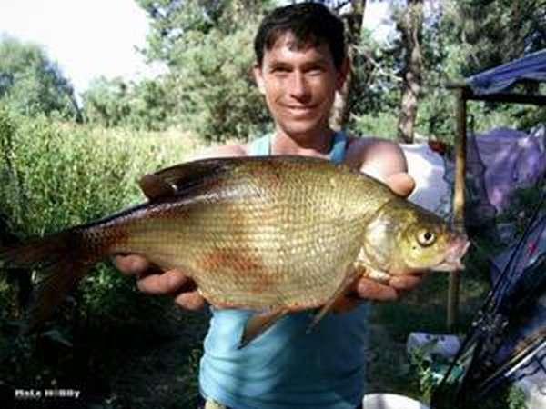 Отчет о рыбалке: Истринское водохранилище