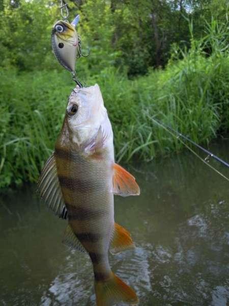 Особенности ловли на реках Кировской области
