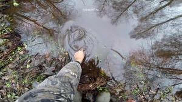 Ловля налима осенью и ловля налима поздней осенью на донку (закидушку) с берега отличается в зависимости от погоды способной заморозить лёд