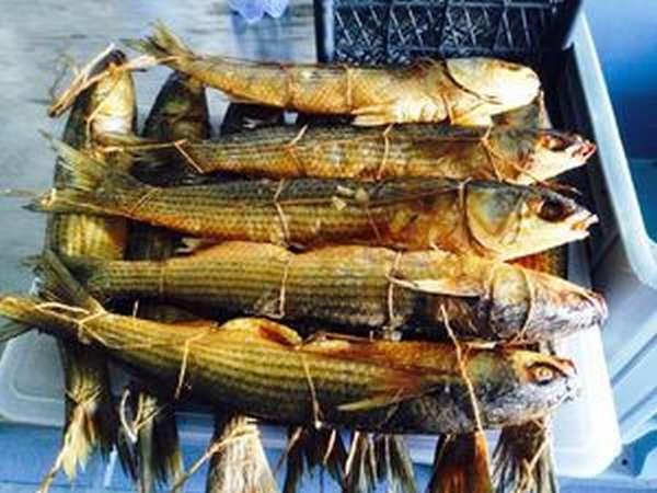 Чем полезна рыба лобань