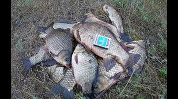 Способы ловли рыбы руками