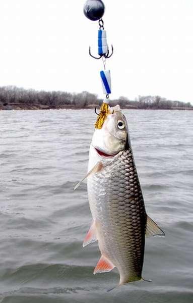 Рыбалка на голавля зимой