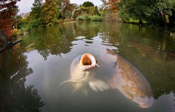 Рыбные водоемы