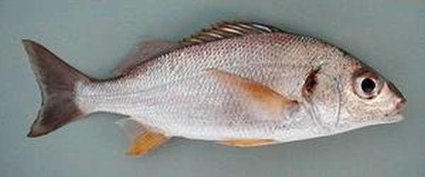 Параметры рыбы