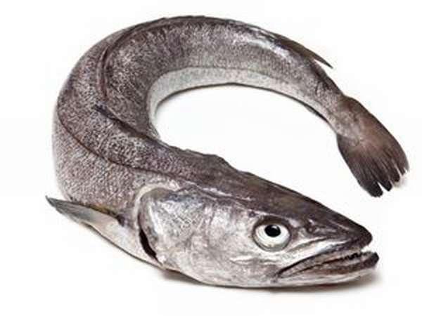 какая рыба относится к морской