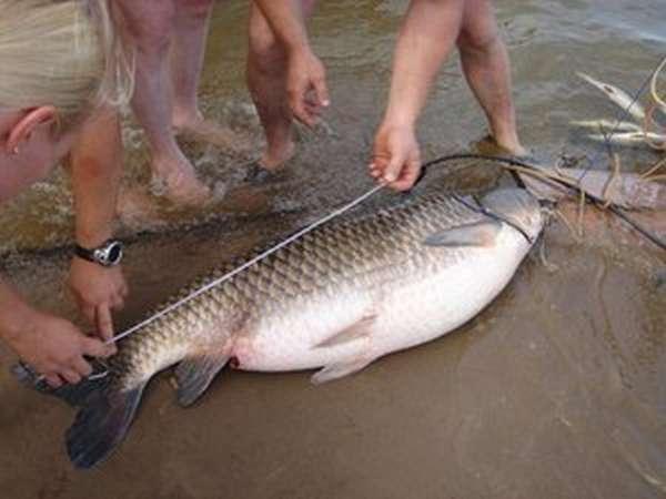 Река Дон: рыбалка
