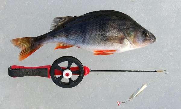 Удочка на окуня для зимней рыбалки