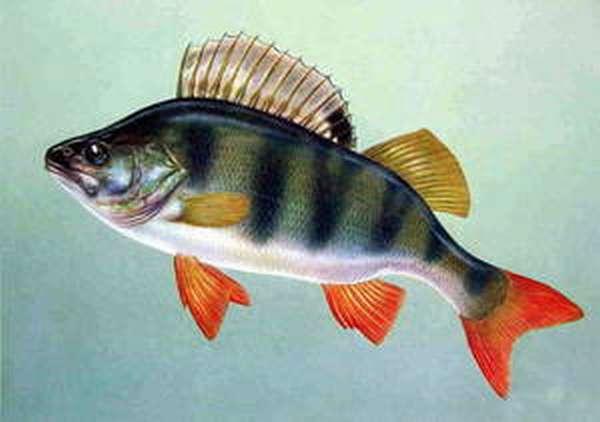 Список рыб