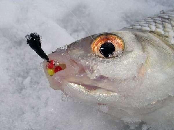 Ловля рыбы на мормышку