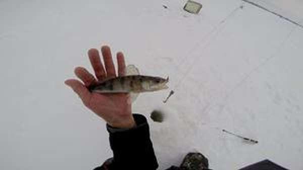 Как ловить зимой судака