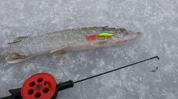 Зимние снасти для рыбалки
