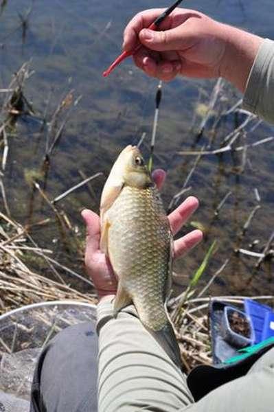 Рыбалка на поплавок: описание
