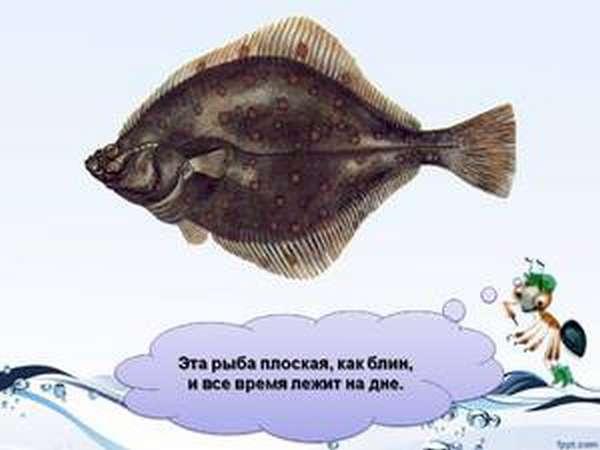 Описание плоской рыбы