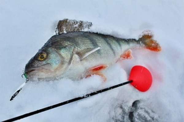 Балансир для ловли рыбы