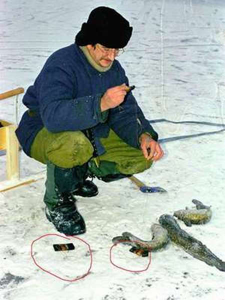 Как ловить налим