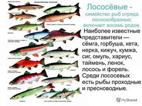 Как определить род рыбы