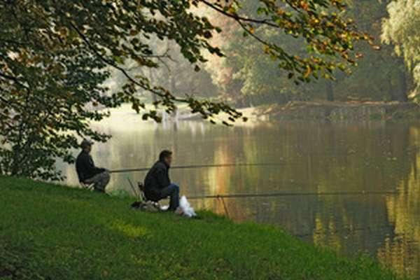 Прогноз рыбалки