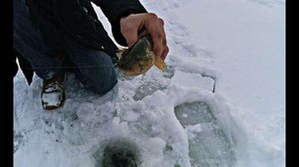 как поймать ротана зимой