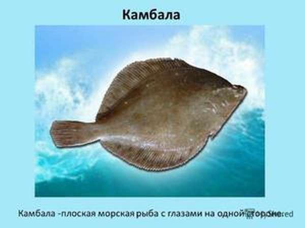Плоски рыбы в природе