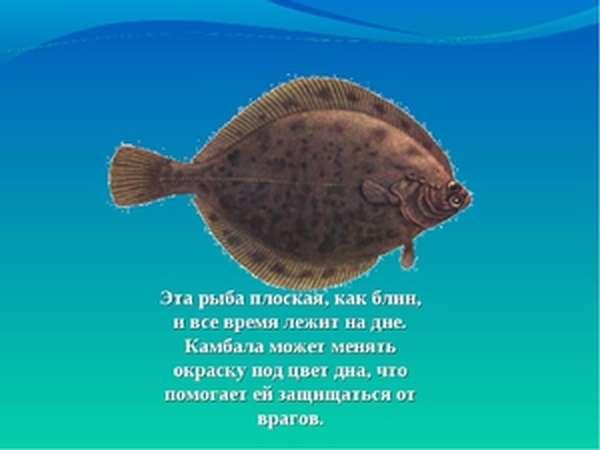 Особенности плоской рыбы