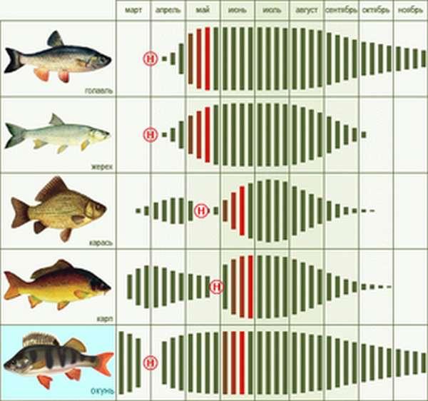 Влияет ли цвет плетенки на клев рыбы
