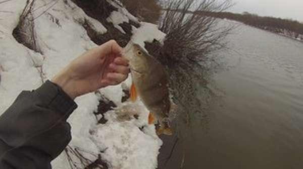 На что ловить голавля
