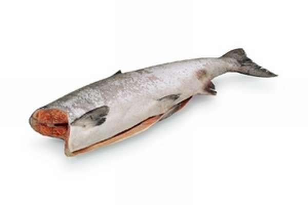 Где обитает и чем полезна рыба чавыча