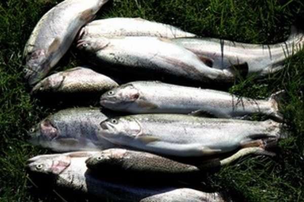 бисеровский рыбхоз
