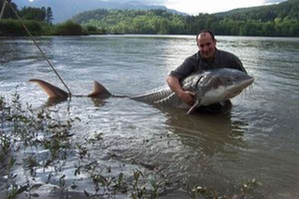 какая рыба водится в реках