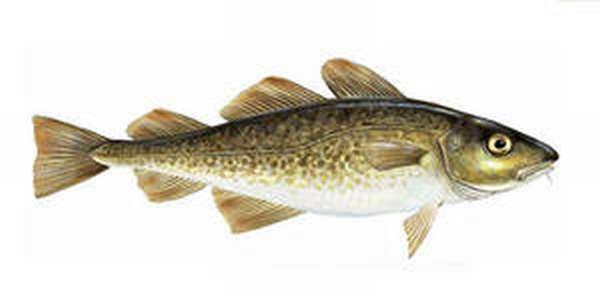 северная рыба названия