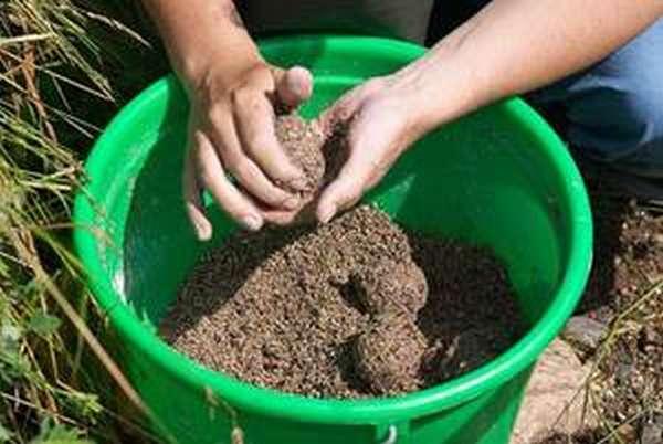 Способ приготовления прикормки для карпа и щуки
