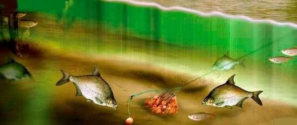 рыбалка на бойлы