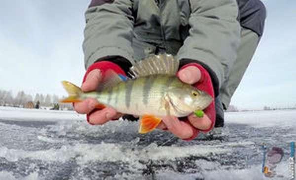 Зимняя рыбалка.Окунь на шарагу.