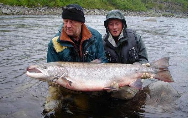 Отличный улов лосося