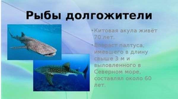 Рыбы-долгожители